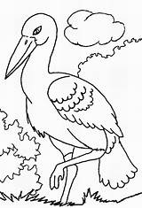 Storks Coloring Pages Stork Print Template Movie Popular Coloring2print sketch template