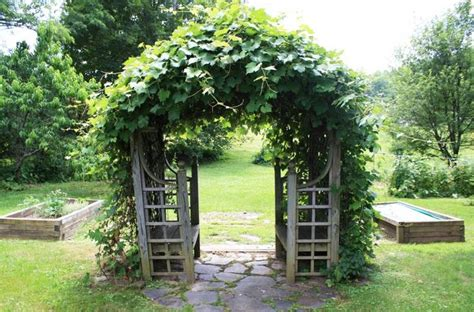 grape vine arbor designs grapevine trellis designs how sweet is the grapevine covered trellis with built in benches