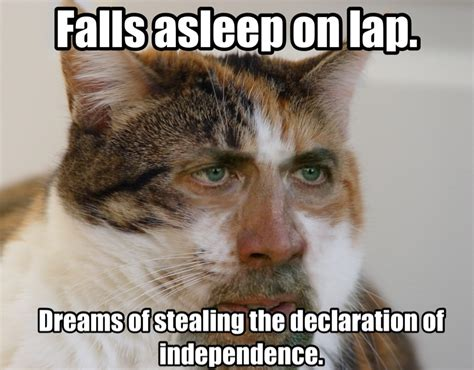 Cats Memes - nicolas cage cats cage cat wants to be a meme make it happen
