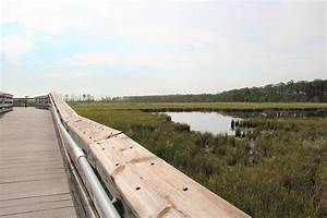 Blackwater National Wildlife Refuge (Cambridge, MD): Top ...