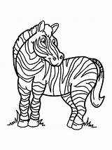 Zebra Coloring Pages Animals Printable Print Mycoloring sketch template