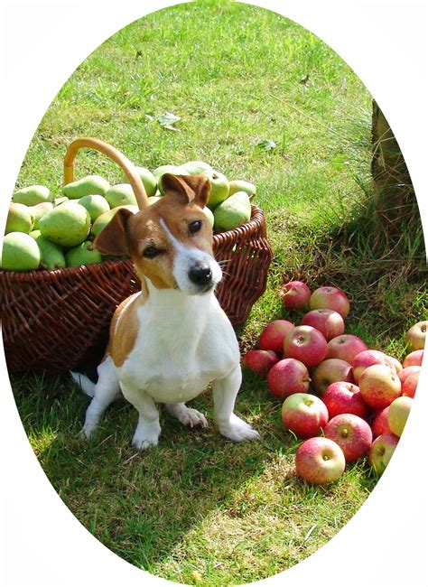 trudette: plentiful harvest
