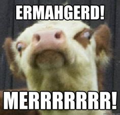 Ermahgerd Happy Birthday Meme - 1000 images about oh my gerd on pinterest birthday scenario game ha ha and baby goats