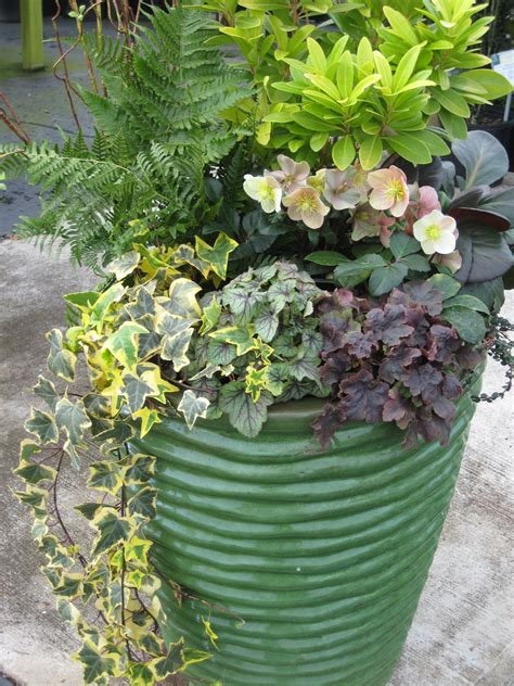 plants for containers best plants for container garden ward log homes