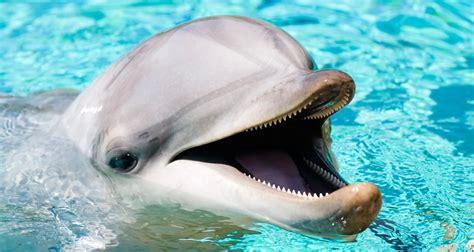 delfin comun