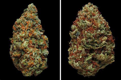erik christiansen photographs  strains  marijuana