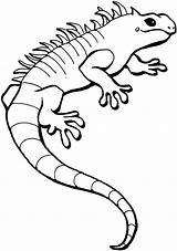 Lizard Coloring Pages Animals Wildlife Lizards Iguana sketch template