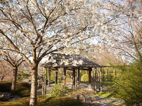 Sven Olav Wir Garten Im Herbst by Fr 252 Hling Im Japanischen Garten Erfurter Fotoclub