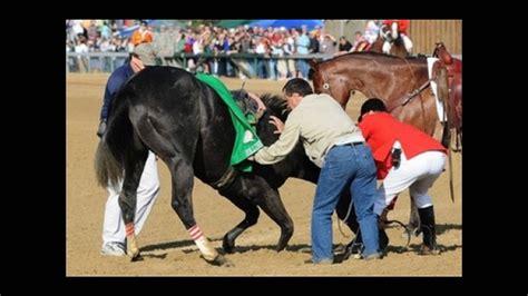 famous racehorses youtube