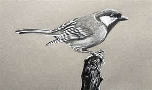 Draw a Realistic Bird with Graphite and Charcoal Pencil