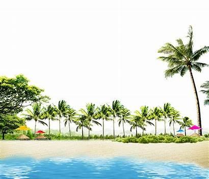 Beach Coconut Summer Palm Huts Palms Trees