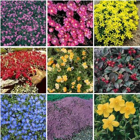 colorful ground cover colorful ground covers top row trailing lantana