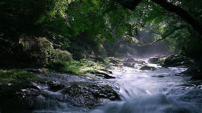 Wallpapers Backgrounds Forest Choice Stream River Improve