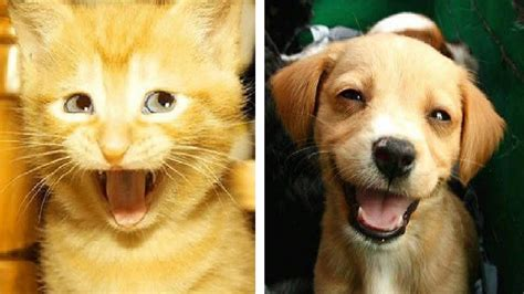 funny cats  funny dogs youtube