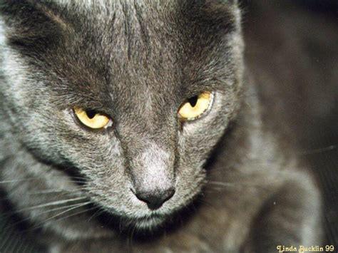 images  de chats  chatons