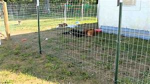 Walmart dog fence wire awesome homes innovative for Dog run fence home depot