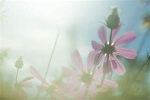 Flowers Sun Light  U00b7 Free Photo On Pixabay