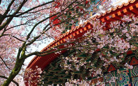 lunar chinese  year  wind  water feng shui