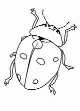 Bug Coloring Pages Printable Bugs Insects Insect Beetle Ladybug Getcoloringpages Printcolorfun Cartoon Fun Bestcoloringpagesforkids Results sketch template