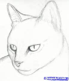 cat sketches cat drawings pencil how to draw a cat draw a