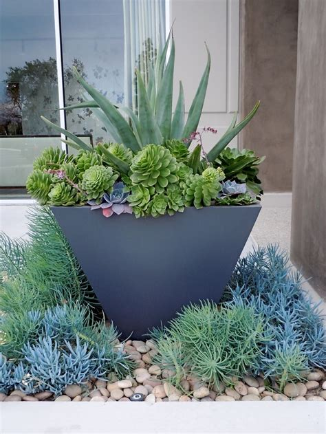 1000+ Images About Succulents In Containers On Pinterest