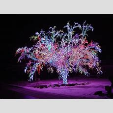 amazing outdoor lighted christmas decorations wholesale