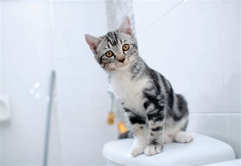pooping outside the cat box and other bathroom behavior
