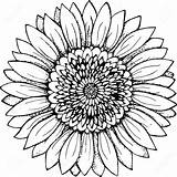 Sunflower Drawing Clipart Flower Drawings Line Simple Outline Coloring Vector Illustration Pages Tattoo Silhouette Pencil Clip Plant Svg Mandala Sketch sketch template