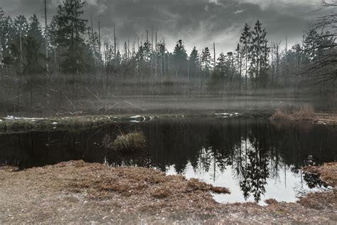 images gratuites paysage arbre eau la nature foret