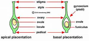 Flower Terminology  Part 2