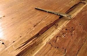 termite damage to hardwood floors carpet daily With termites parquet
