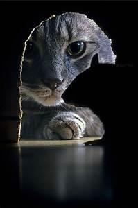 Best 25 Cat photography ideas on Pinterest