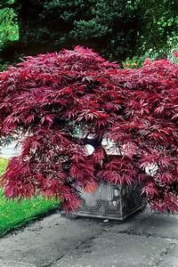 Arbuste Fleuri En Pot : les 85 meilleures images du tableau plantation de fleurs ~ Premium-room.com Idées de Décoration