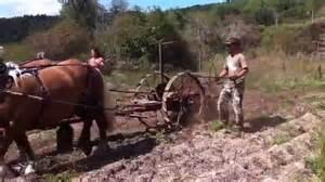 ramassage des pommes de terre au cheval youtube