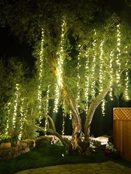 Christmas Lights Hanging From Trees