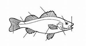 Goldfish Diagram To Label