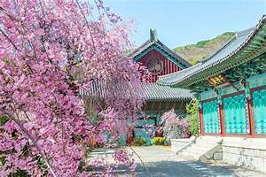 Where to See Cherry Blossoms in Korea 2018