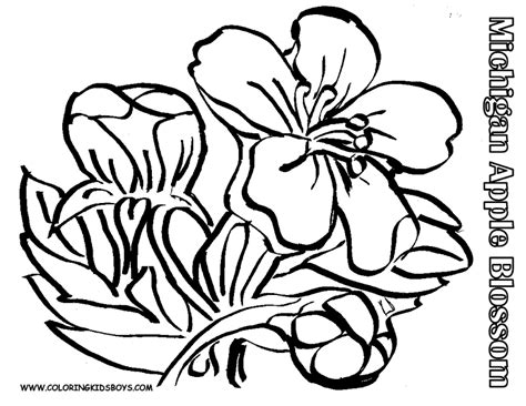 Black And White Flower Coloring Pages