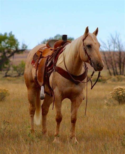 loyal horse horses