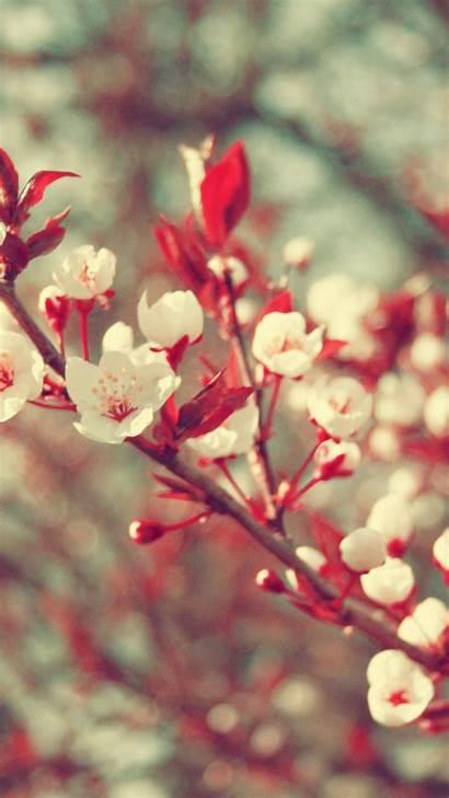 Spring Hello Wallpapersafari Desktop Resolution Phone