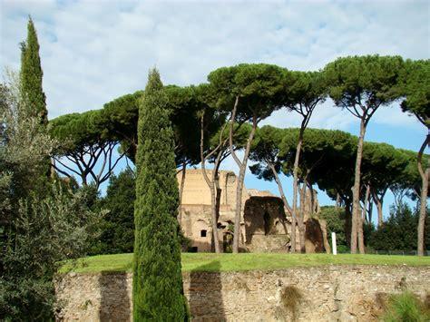 italian pine tree pretty nails and tea italian pine trees pompeii italy 7609