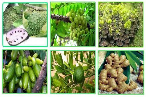 usaha agribisnis menguntungkan indonesia
