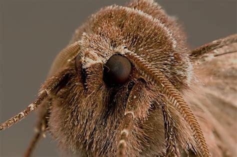 papillon de nuit des animaux photo gratuite sur pixabay