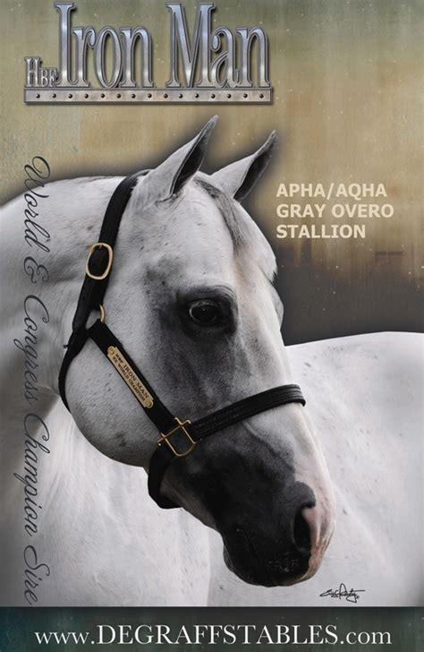 hbf iron pedigree equine services cowboy
