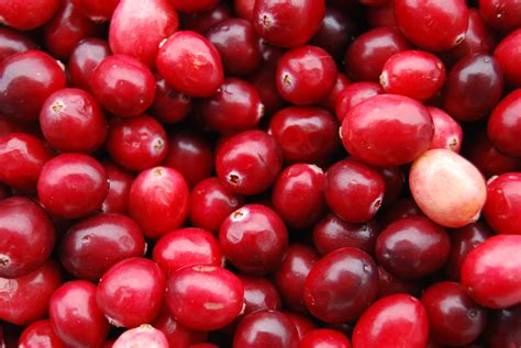 cranberry and chagne name visual references cranberry sauce