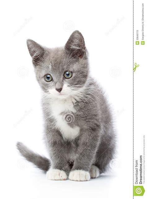 upset kitten stock image image  depressed small