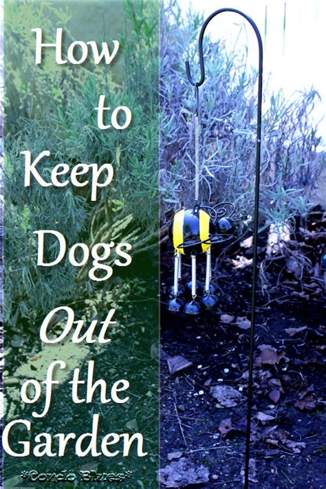 keep dogs out of garden condo blues how to keep dogs out of the garden