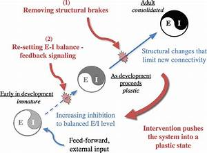 Removing Brakes On Adult Brain Plasticity  From Molecular