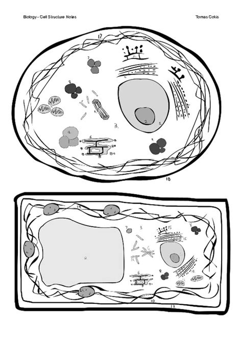images  animal cell labeling worksheet label