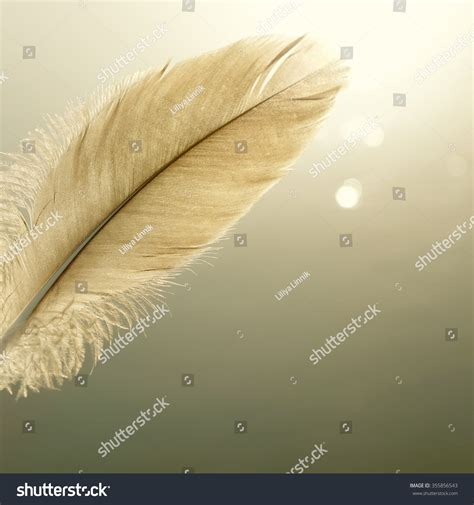 Bird Feather One Bright Abstract Nature Stock Photo